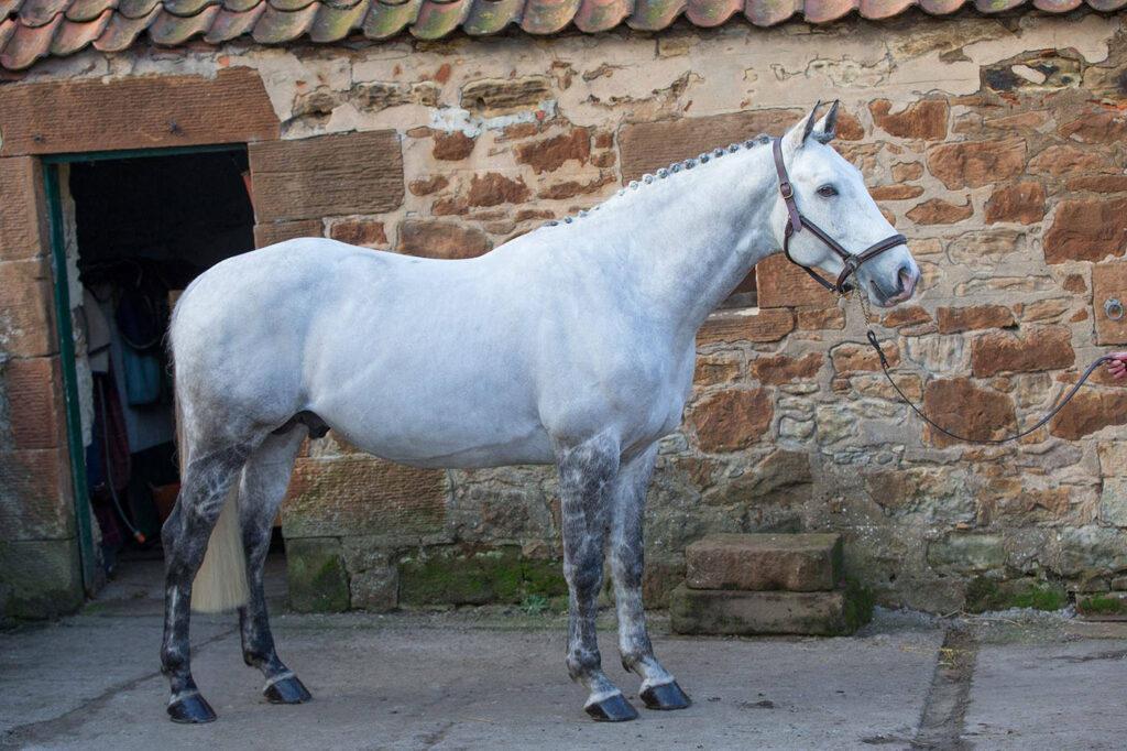 burnetts bravado horse