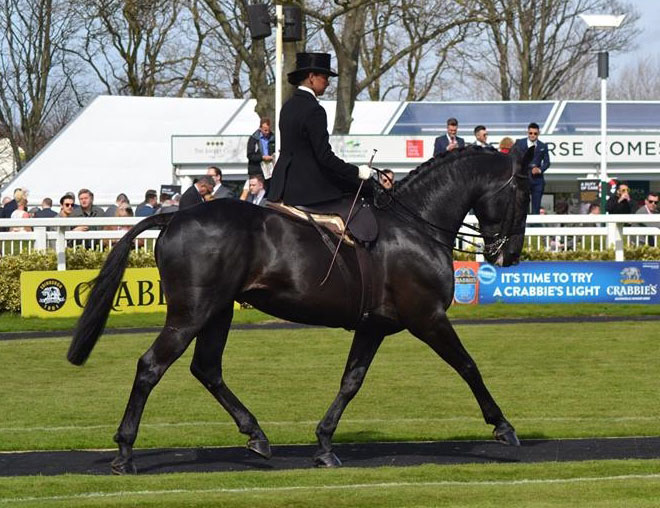 cos me is black horse