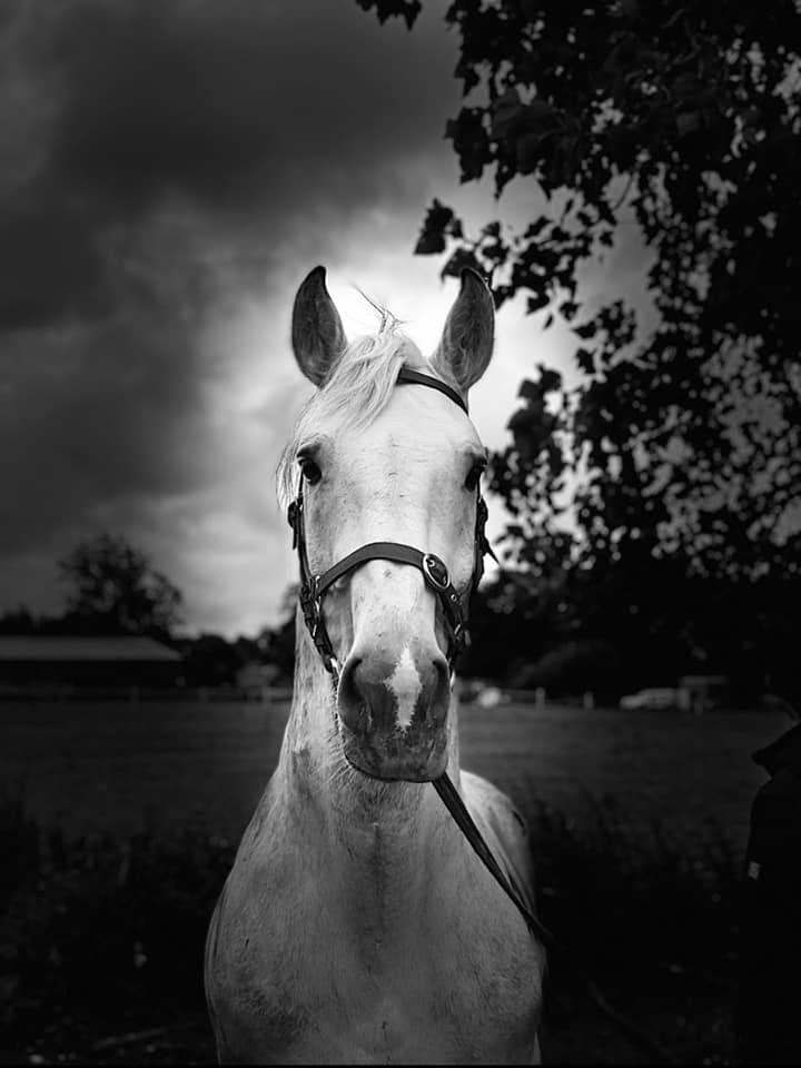 hazevern riverside horse